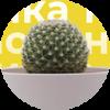 Новинка: в продаже семена кактуса