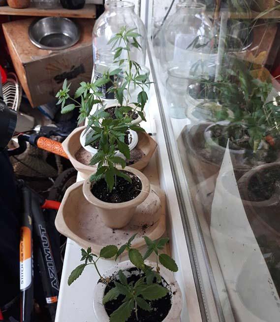 Выращивать марихуану на подоконнике ведущая марихуана