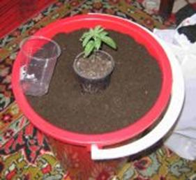 Пересадка конопли в землю статья о пользе марихуаны